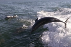 dolphins_001